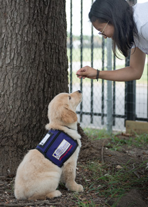 Paws for Purple Hearts training